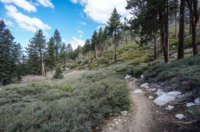 hiking-san-gorgonio_41769750452_o