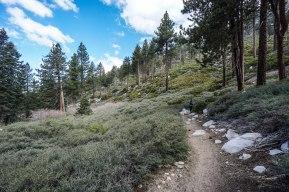 hiking-san-gorgonio_41769750452_o